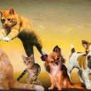 Les meilleurs salons sur les animaux